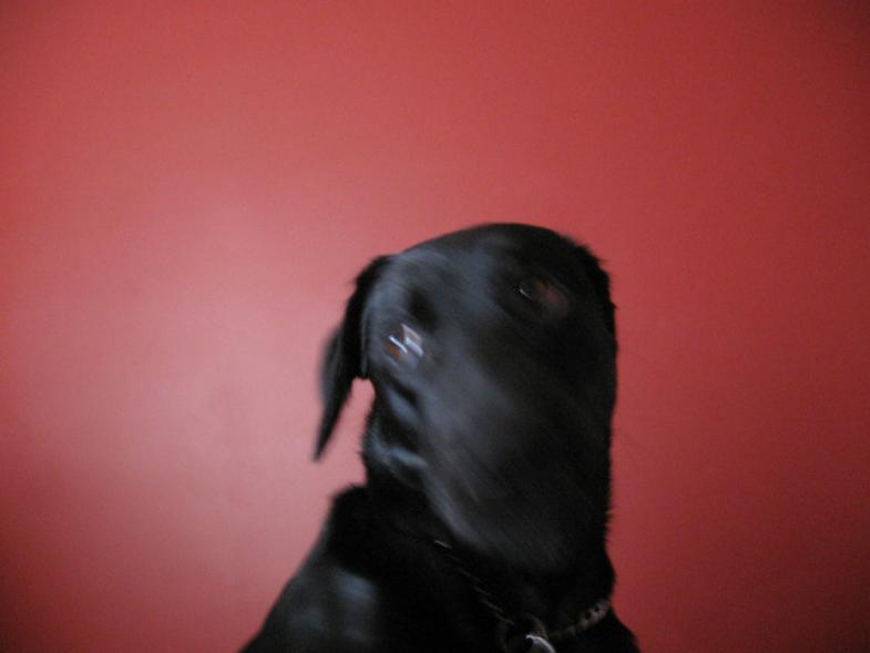 Bacon's Dog 2
