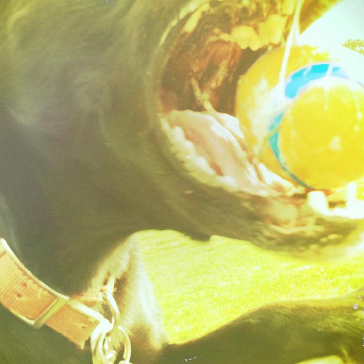 Luna with Ball