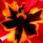 Dianes_Flowers