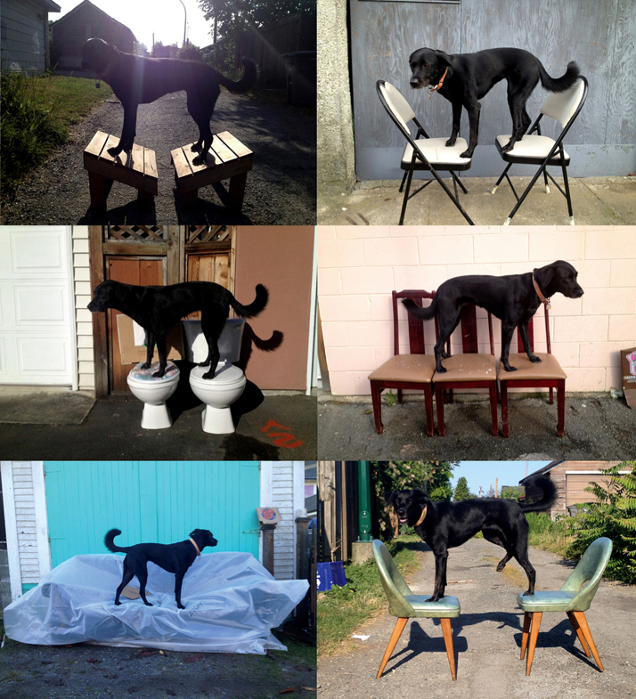 Luna On Chairs 2